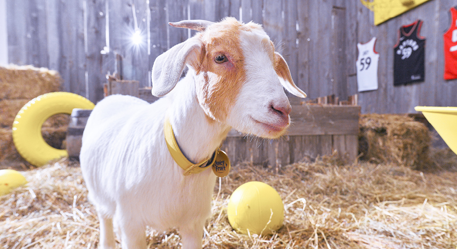 Juicy The Goat (Juicy la chèvre) image